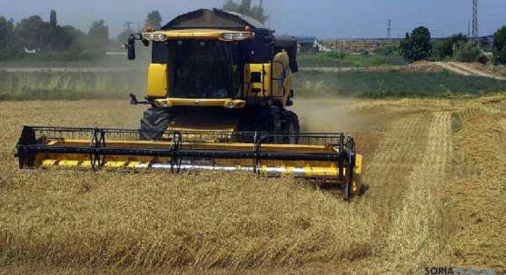 Foto 1 - Investigadores de la UVa diseñan un nuevo índice mejorado para predecir cosechas
