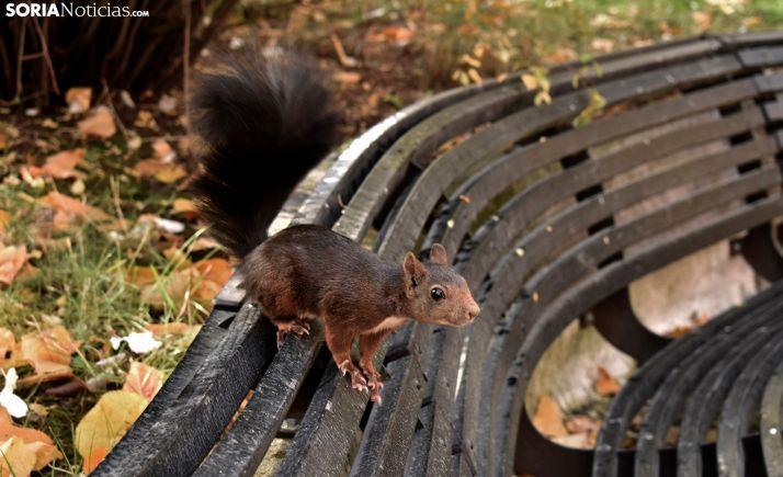 Una ardilla en el parque de La Dehesa. /SN