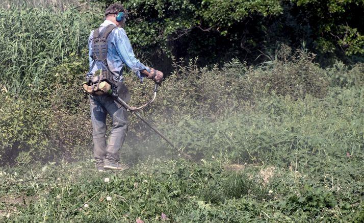 Foto 1 - La Diputación recibirá 330.000 € de la Junta para desempleados que realizarán labores forestales