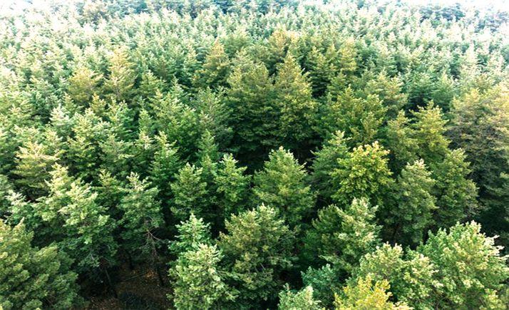 Foto 1 - Adjudicadas labores silvícolas y mejoras forestales en Tierras Altas por 583.862 €