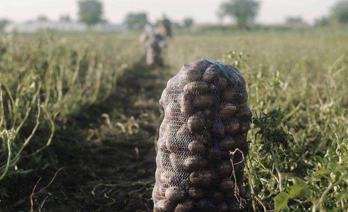 Foto 1 - Abren el camino para fortalecer la la competitividad de la patata de Castilla y León