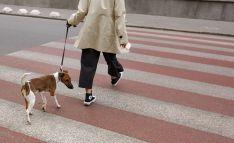 El alcalde burgense llama a la responsabilidad en la tenencia de perros