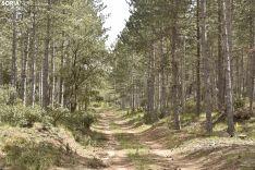 Presentación del proyecto LIFE Soria ForestAdapt. /Encarna Muñoz