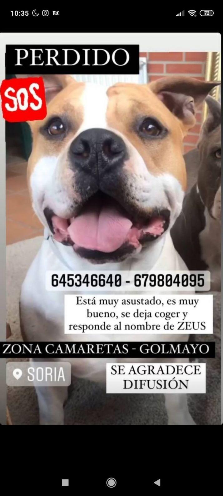 Foto 1 - Desaparece un perro en Soria