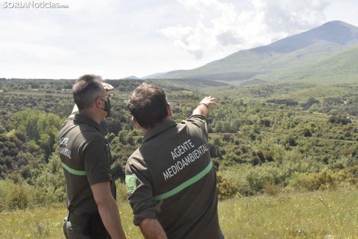 Europa elige los bosques sorianos para aprender a adaptarse al cambio climático