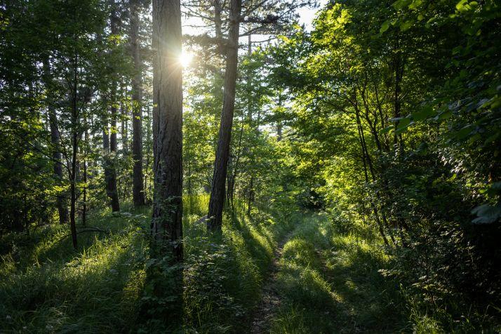 Cinco bosques mágicos que visitar en Castilla y León
