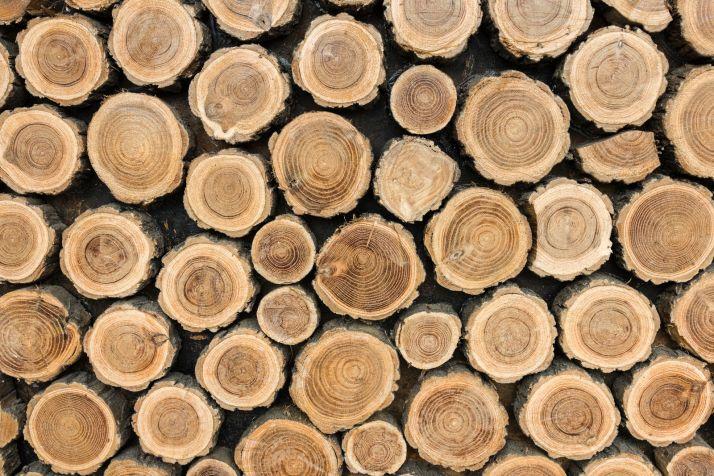 Foto 1 - Licitados los aprovechamientos maderables de Soria por más de 660.000 euros