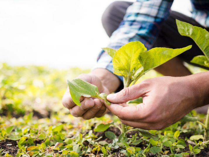 Foto 1 - FOES presenta la nueva convocatoria de ayudas para empresas agroalimentarias
