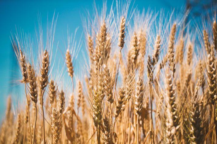 Foto 1 - Opinión: ASAJA muestra la realidad de los precios del cereal
