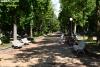 Foto 1 - Y los árboles conquistaron La Dehesa