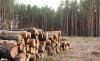 Foto 1 - El Ayuntamiento aprueba un nuevo pliego para provechamiento maderable