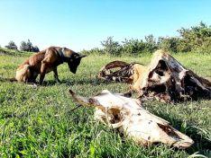 Foto 3 - CSIF solicita a la Junta la creación de unidades caninas para la protección del medio ambiente