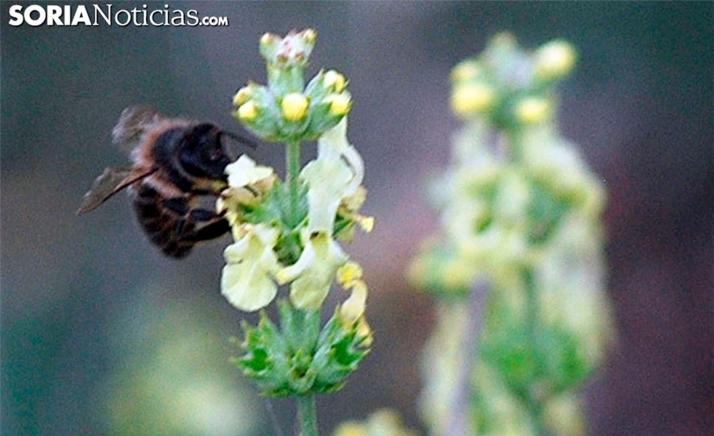 Foto 1 - Incrementan un 70 % el presupuesto de las ayudas para la mejora de la producción y comercialización de la miel