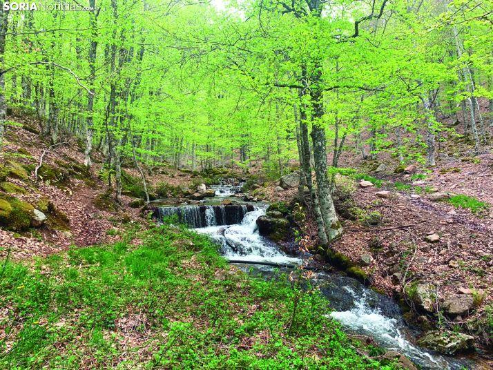 Abrazando la sierra de Cebollera: entre las cuencas del Duero y del Ebro
