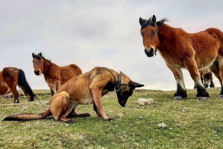 Foto 2 - CSIF solicita a la Junta la creación de unidades caninas para la protección del medio ambiente