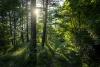 Un bosque soriano.