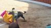Foto 2 - Nueve orejas y dos rabos en la corrida de El Burgo: los tres actuantes salen por la puerta grande