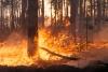 Foto 1 - La Junta declara la alerta de riesgo de incendios forestales para el domingo