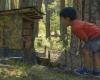 Un niño descubre el Bosque Mágico.