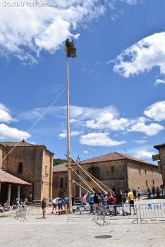 Pingada del Mayo en Molinos de Duero 2021.