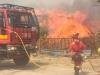 Foto 2 - 10.000 hectáreas calcinadas en el incendio de Cepeda de la Mora en Ávila