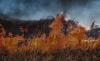 Foto 1 - Declarado el nivel 2 de peligrosidad en el incendio forestal de Navalacruz (Ávila)