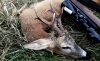 Foto 1 - Investigados como presuntos autores de caza furtiva en Cihuela