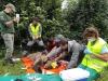 Foto 2 - El programa de captura y radiomarcaje de oso pardo en Castilla y León se inicia con éxito con una osa en Alto Sil