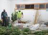 Foto 1 - Sorprendido en Soria por la Guardia Civil cuando cultivaba 9 plantas de Marihuana