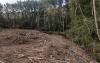 Aspecto de la arboleda y tramo del río que ha sido cortada. /ASDEN