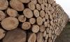 Foto 1 - Cubilla licita aprovechamientos maderables por 18.000 euros