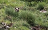 Foto 1 - Publicada la subvención de dispositivos de protección ganadera frente al oso pardo