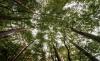 Foto 1 - Aprobada una subvención de 100.000 euros para la Federación de Asociaciones Forestales de Castilla y León