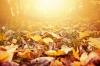 Foto 1 - Cinco localizaciones mágicas para disfrutar del otoño en Castilla y León