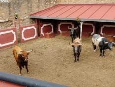 Los Miuras, imponentes, en la plaza de toros de Soria esta mañana.