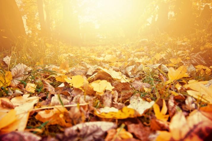 Cinco localizaciones mágicas para disfrutar del otoño en Castilla y León