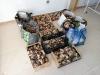 Foto 1 - Los primeros decomisos micológicos en Soria alcanzan los 154 kilogramos