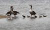 Foto 1 - '¡Canta, vuela y elévate como las aves!', lema del día Mundial de las Aves Migratorias que se celebra este fin de semana
