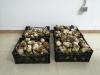 Foto 2 - Incautados más de 90 kilos de boletus en el coto de Pinares Urbión