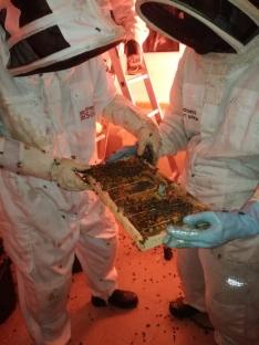 Foto 4 - Retiran en Soria un enjambre con 30.000 abejas