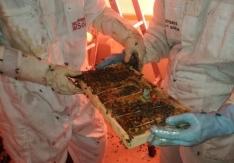 Retiran en Soria un enjambre con 30.000 abejas