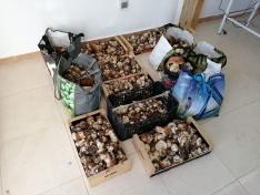 Incautados más de 90 kilos de boletus en el coto de Pinares Urbión
