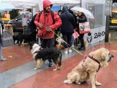 Foto 3 - La lluvia impide la celebración de la I Feria de Mascotas de Soria