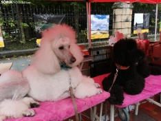 Foto 8 - La lluvia impide la celebración de la I Feria de Mascotas de Soria