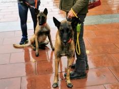 Foto 7 - La lluvia impide la celebración de la I Feria de Mascotas de Soria