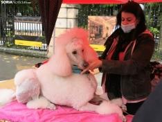 Foto 6 - La lluvia impide la celebración de la I Feria de Mascotas de Soria