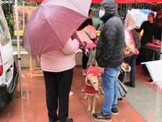 Foto 5 - La lluvia impide la celebración de la I Feria de Mascotas de Soria